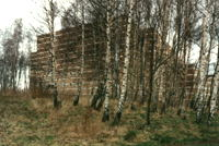 the inspiring birches at Egedal Kirke